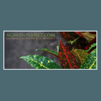 green-planet-logo-transparent-375x375